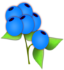 Blueberries icon png
