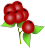 Blue Berry icon png