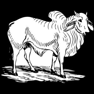 Brahma Bull icon png