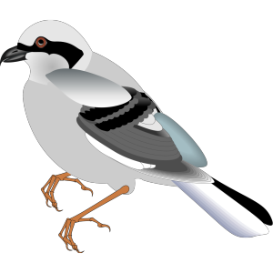 Standing Bird icon png
