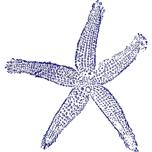Maehr Starfish Wedding icon png
