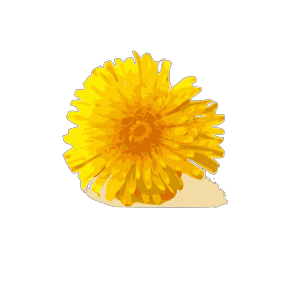 Dandelion icon png