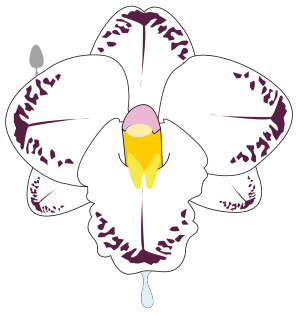 Fleur icon png