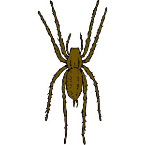 Brown Spider icon png