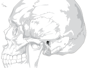 Animal Side View icon png