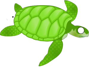 Turtle icon png