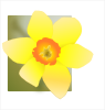 Daffodil 02 icon png
