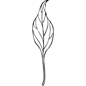 Leaf Decoration icon png