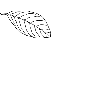 Oak Leaf icon png