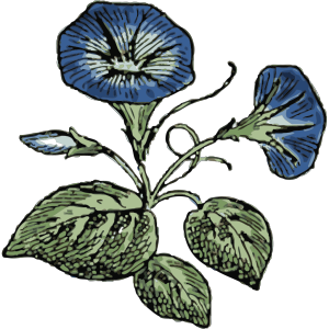 Morning Glory icon png