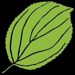 Serrate Leaf icon png