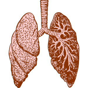 Lungs icon png