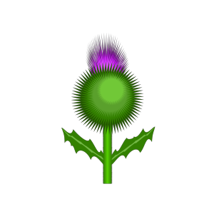 Scottish Thistle icon png