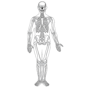 Human Skeleton Front No Text No Color icon png