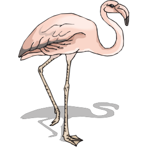 Flamingo With Shadow icon png
