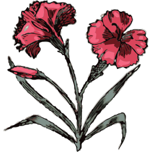 Carnation Illustration With Color icon png
