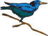 Blue Perched Bird Art icon png