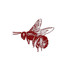 Honey Bee icon png