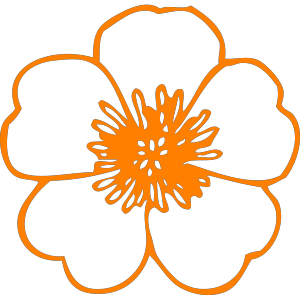 Orange Flower  icon png