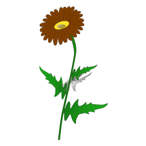 Gray Brown Daisy icon png