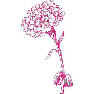 Pink Carnation icon png