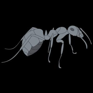 3d Gray Ant