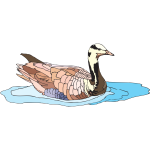 Colorful Swimming Duck icon png