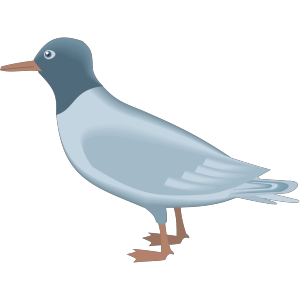 Blue Gull icon png
