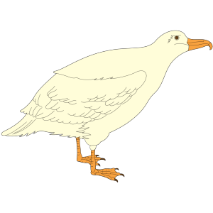 Cartoon Gull icon png