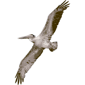 Pelican Flying icon png