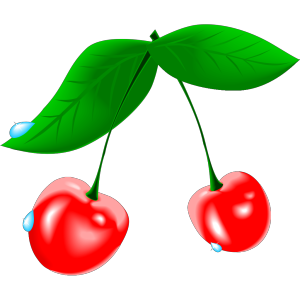 Bird Cherry icon png