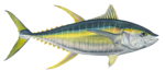 Ahi Tuna Transparent Background icon png