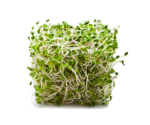 Alfalfa Transparent PNG icon png