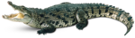 Alligator Background PNG icon png