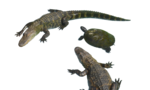 Alligator PNG Clipart icon png