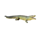 Alligator PNG Photos icon png
