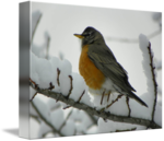American Robin PNG Transparent Image icon png