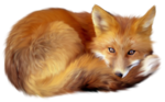 Artistic Fox Transparent PNG icon png