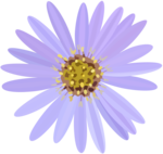 Aster Transparent PNG icon png