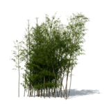 Bamboo PNG File icon png