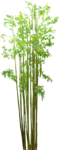 Bamboo PNG Image icon png