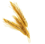 Barley PNG File icon png