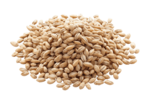 Barley PNG Image icon png