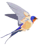 Barn Swallow Background PNG icon png
