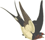Barn Swallow PNG Pic icon png