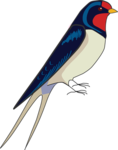 Barn Swallow Transparent Images PNG icon png