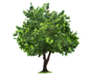 Beautiful Tree PNG icon png