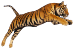 Bengal Tiger PNG Photo icon png