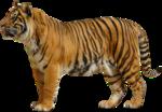 Bengal Tiger Transparent PNG icon png
