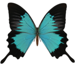 Black And Cyan Butterfly PNG icon png